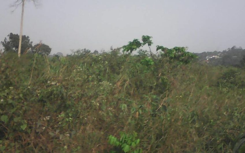 Land situated around midea near Nsawam